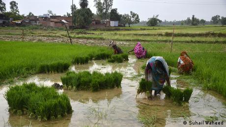 Bildergalerie Sawan Regenzeit in Indien