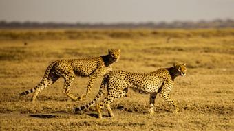 08.2013 DW Global Ideas Serengeti 4