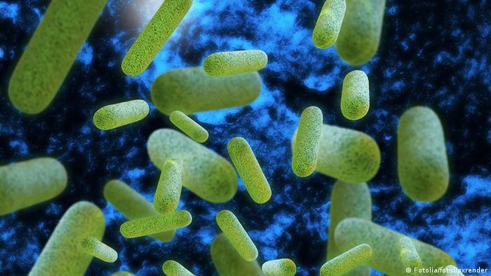 Bacteriile Legionella la microsop
