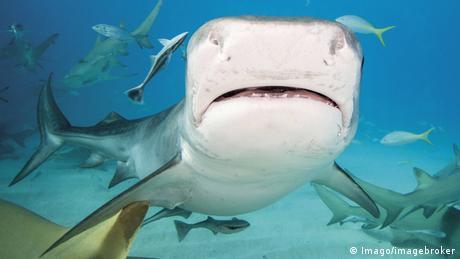 Zum Thema - Deutsche Touristin Jana Lutteropp stirbt nach Hai-Attacke