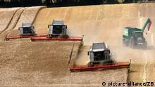 Bauernverband mit Ernte 2013 zufrieden Leichter Anstieg bei Getreide