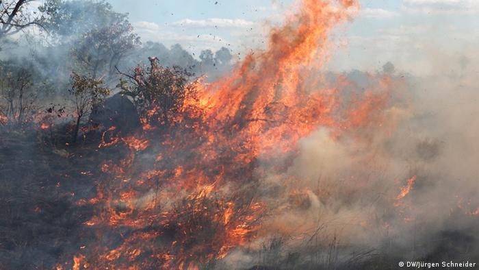 Wildfire in Brazilian Cerrado