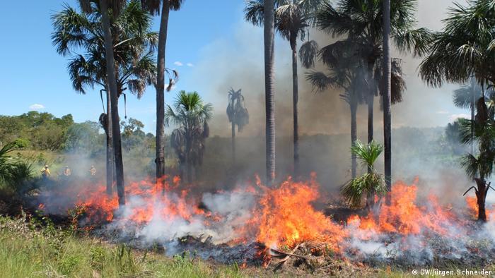 Na foto: queimada no nordeste do Brasil