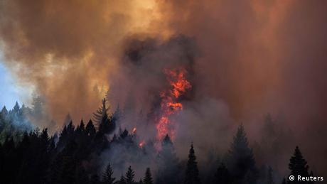 Forest fire (photo: REUTERS/Max Whittaker )