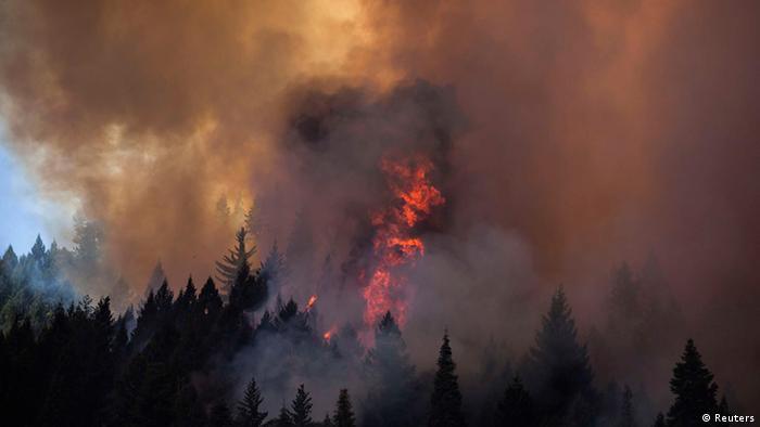 Waldbrand (Foto: REUTERS/Max Whittaker )