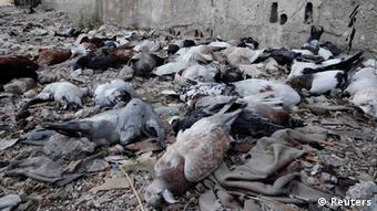 Pigeons lie on the ground after dying from what activists say is the use of chemical weapons by forces loyal to President Bashar Al-Assad in the Damascus suburbs of Arbeen August 24, 2013. Picture taken August 24, 2013. REUTERS/Ammar Dar (SYRIA - Tags: POLITICS CIVIL UNREST CONFLICT ANIMALS TPX IMAGES OF THE DAY)