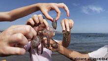 Qualle Quallenplage Quallen Meer Mittelmeer Küste Canaren Spanien