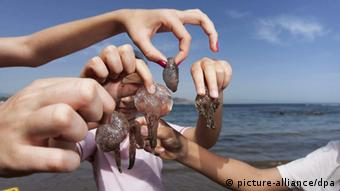 epa03217267 A group of girls hold various jellyfish at a beach in Las Palmas in the Canary Islands, Spain, 13 May 2012. The heat has encouraged bathers at the Canary Islands, but the flood of jellyfish near the beach makes it risky to enjoy the water. EPA/Ángel Medina G.