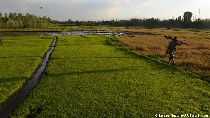 Indien Reisanbau