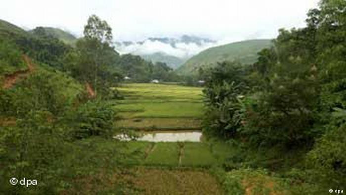 Vietnam Felder und Bäume, Landschaft (dpa)
