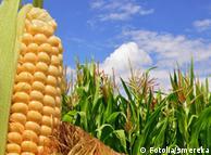 Новина про зростання безмитних квот на експорт деяких українських товарів в ЄС викликала чутки про майбутнє подорожчання продуктів в Україні.