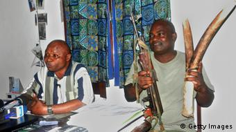 Two security officers working for the 'Progepp' anti-poaching program for the Nouabale Ndoki national park show journalists a gun and ivory tusks captured from poachers. (Photo credit should read Laudes Martial Mbon/AFP/GettyImages)