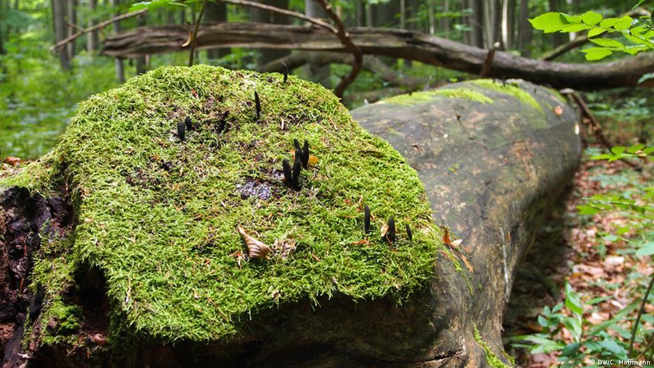 ein urwald mitten in deutschland  dw reise  dw  13092013