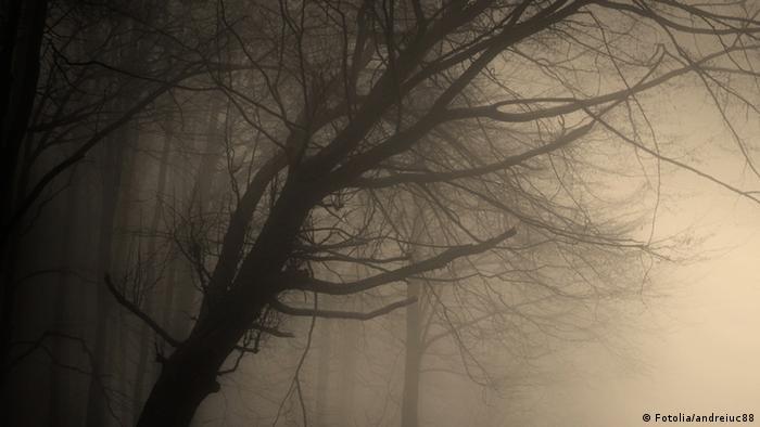 Umrisse eines kahlen Baums im Nebel.