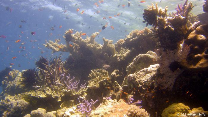 Foto: Underwater view of a coral reef (Foto: CC BY SA 2.0: Matt Kieffer/flickr.com: http://www.flickr.com/photos/mattkieffer/4208647458/)