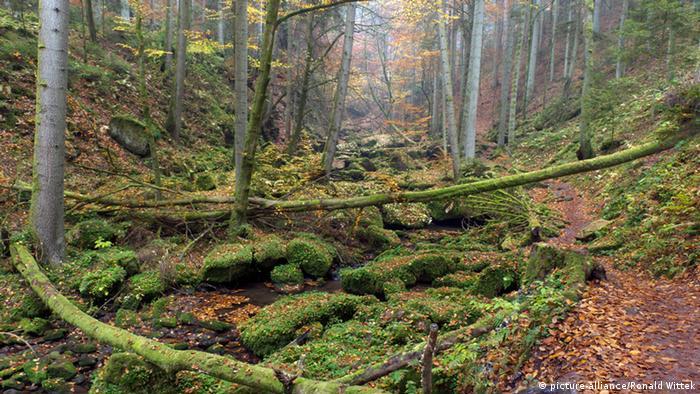 Herbst in der Monbachtal-Schlucht