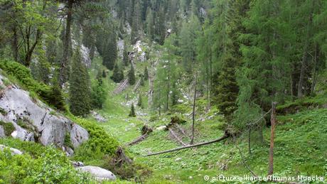 Reiteralpe im Nationalpark Berchtesgaden