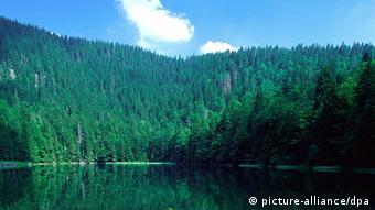 Amor pelos bosques permeia literatura, música e artes plásticas do Romantismo