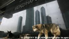 Bildergalerie Streunende Tiere in Großstädten Hunde in Moskau