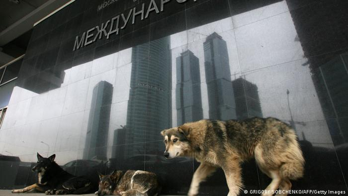 Hunde in Moskau (Foto: GRIGORY SOBCHENKO/AFP/Getty Images)