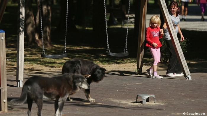 A mother urges her daughter away fom two stray dogs wandering acoss a playground Photo by Sean Gallup/Getty Images