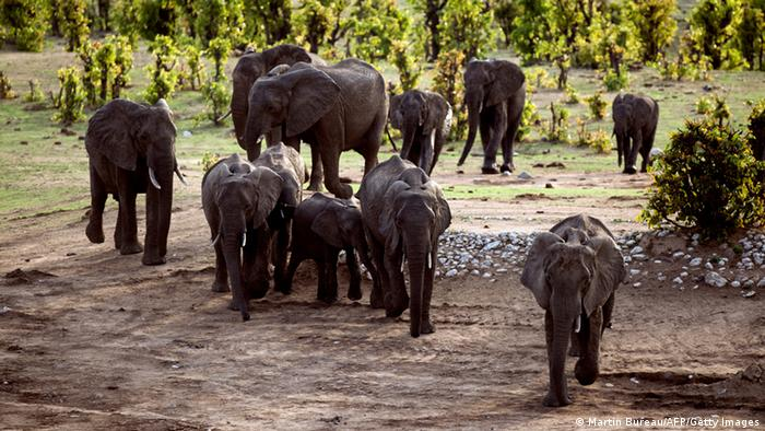 GOP Congressman Calls for Ban on Elephant Hunts