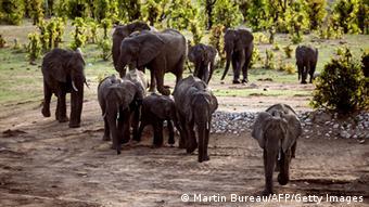 Elefanten in Simbabwe