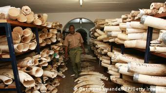 A Zimbabwe National Parks worker walks in the room where elephant tusks and rhino horns are kept
