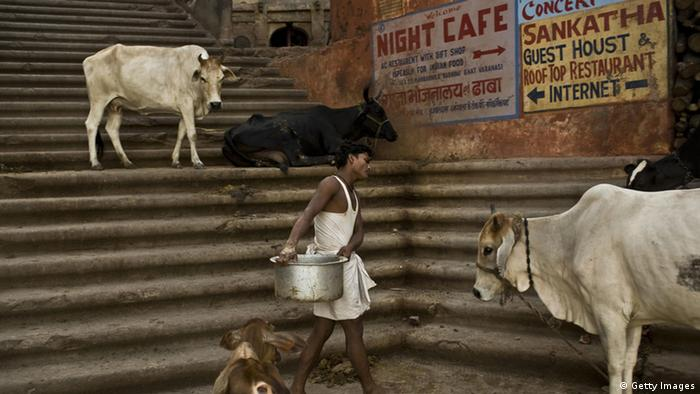 An Indian man walks among cows in a street market in Varanasi on July 21, 2009 (Photo: PEDRO UGARTE/AFP/Getty Images)