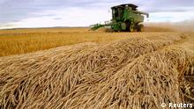 Tara Giles operates a combine as she harvests wheat on a 160-acre field located south of High River, Alberta (Reuters)