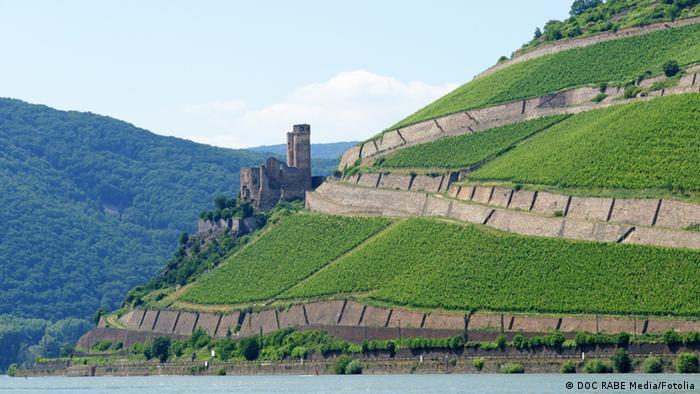 Vineyard in the Rhine region (DOC RABE Media/Fotolia)