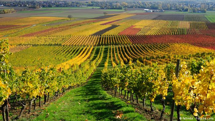 Vineyards in shades of green, orange and yellow in autumn time