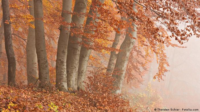 Orange-colored leaves on trees surrounded by mist.