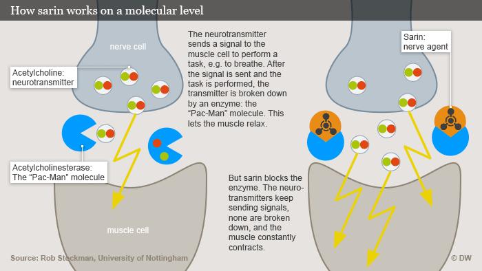 Infografik so wirkt Sarin auf molekularer Ebene Englisch