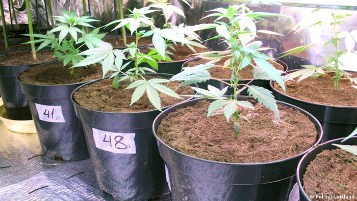 Lettland Riga Cannabis Marihuana Drogen