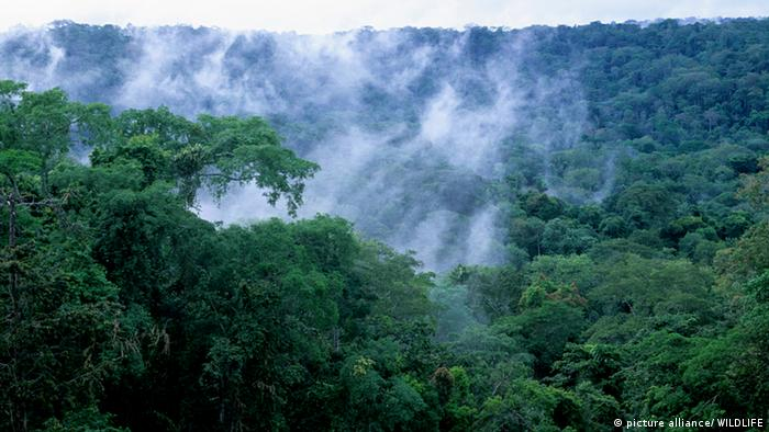 Mist raising from the rainforest in the western congo basin.