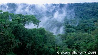 Kongobecken Regenwald Nebel Kongo Afrika