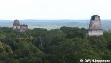 Bildbeschreibung: Die Maya-Ruinen von Tikal liegen im Maya Biosphärenreservat, ein Naturschutzgebiet in Guatemala an den Grenzen zu Mexiko und Belize. Aufnahme: 21.09.2013, Tikal, El Petén, Guatemala. Foto Helle Jeppesen für DW