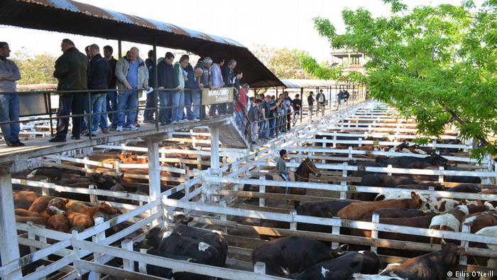 Argentinien - World Food Day Rinder Markt