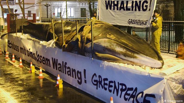 فعالان سازمان گرین پیس (صلح سبز)، نهنگ مرده با طول ۱۷ متر و وزن ۲۰ تن را در جلوی سفارت ژاپن در برلین قرار دادند. پیش از این اعتراض، دولت ژاپن اجازه صید نهنگ برای مقاصد پژوهشی را صادر کرده بود.