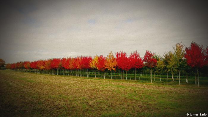 A row of red and orange trees next to a green field in North-Rhine Westphalia. Copyright: James Early