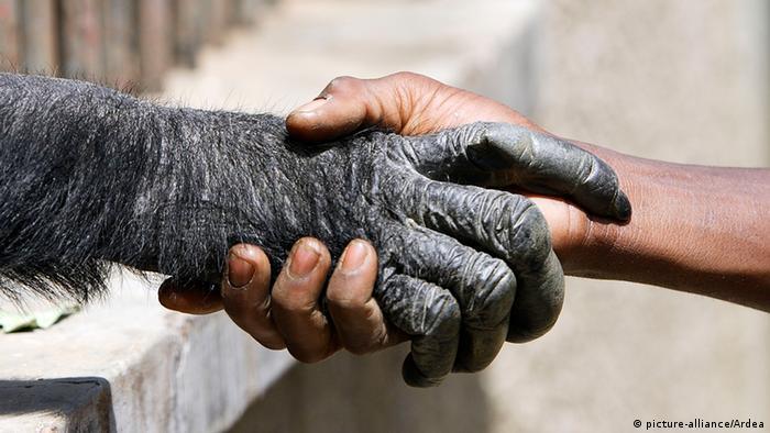 Die Hand eines Affen umfasst die Hand eines Menschen