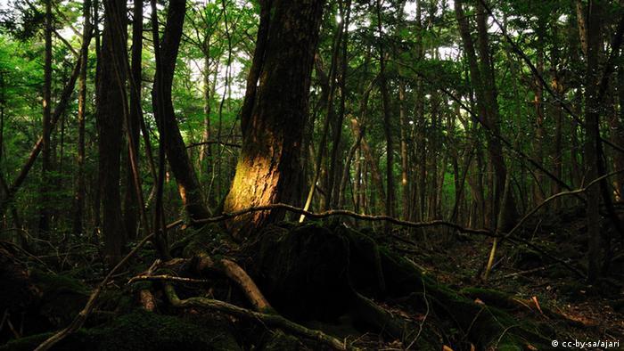 Aokigahara Wald (cc-by-sa/ajari)