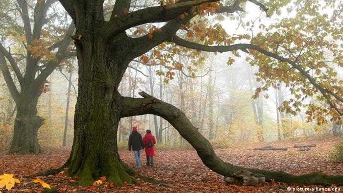 Ein Paar spaziert durch einen herbstlichen Wald, im Vordergrund ein großer Baum