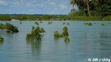 Mangroven ++ DW / Uhlig ++