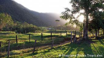 Venezuela Landwirtschaft Los Andes Berge Waldkaffee