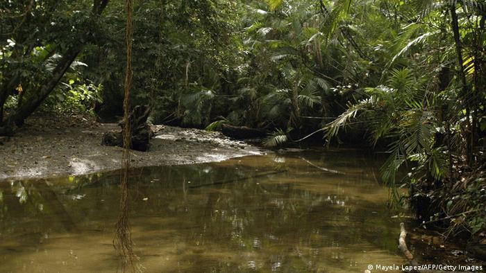 Las selvas tropicales, pulmones del planeta.