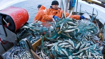 Fishermen catching fish