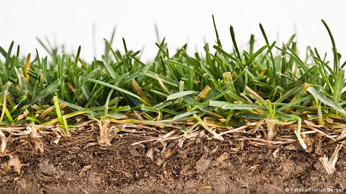 Cross section of grass and soil