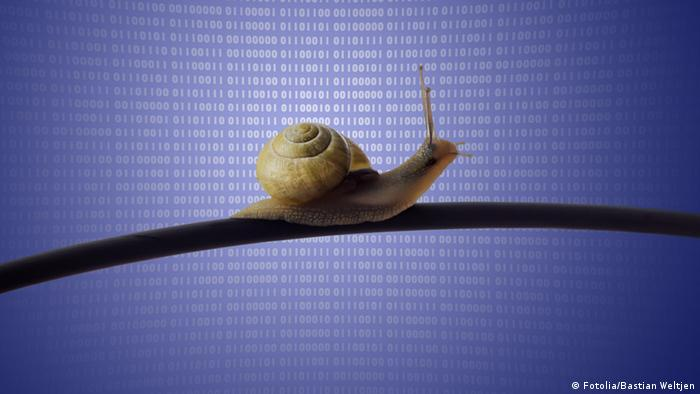 A snail on a telephone cable